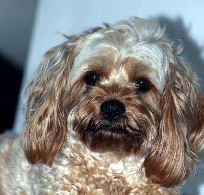 Tara's dog Bo